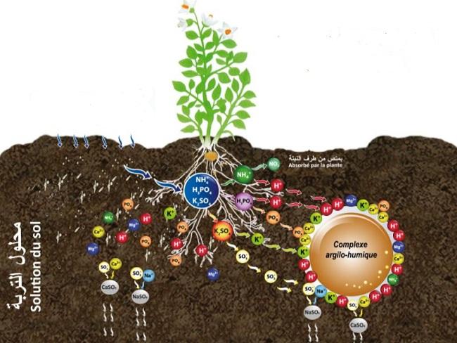La nutrition des plantes et l'amendement du sol