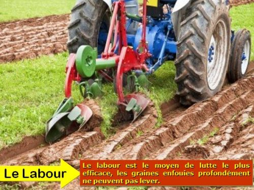 le Labour