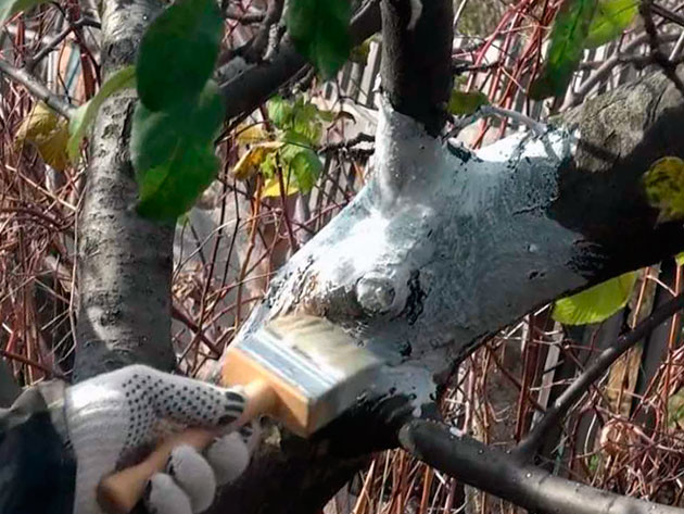 المعالجة الشتوية للأشجار المثمرة و الكروم