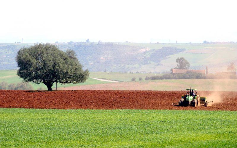 التخطيط للمشاريع الفلاحية او الزراعية الناجحة