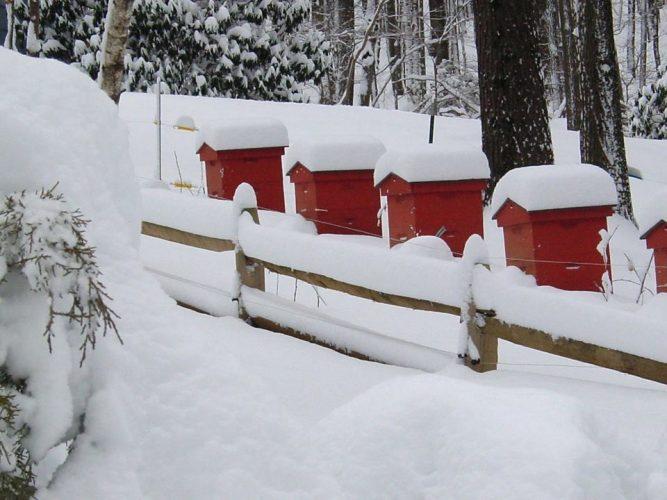 ما هى خطوات تشتية النحل ورعايته فى فصل الشتاء