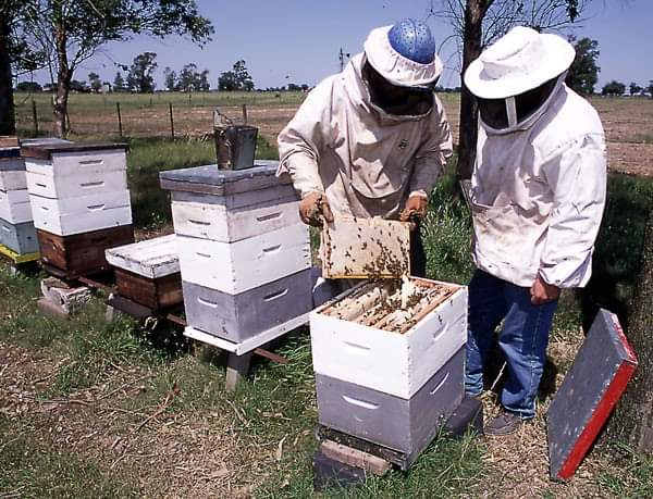 طريقة فحص خلايا النحل ورعايته في الفصول الاربعة