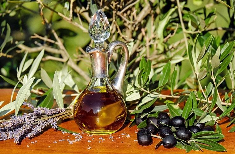 الأعمال الزراعية الضرورية لمحصول الزيتون على مدار السنة